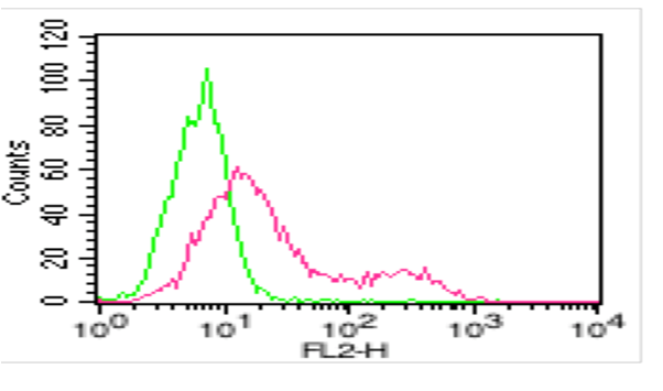 Figure 1: FACS: Cell Surface staining of human ACE2 on  HepG2 cell line. Red:  Human anti-ACE2 antibody (Clone:AC18F), 1ug/10^6 cells were used. Green : Isotype control, mouse IgG1, 1ug/ 10^6 cells was used as control. PE conjugated Goat anti-mouse IgG was used as secondary antibody.
