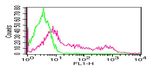 Fig-1: Cell Surface flow analysis of hCD8 in PBMC (Lymphocytes) using 0.5 µg/10^6 cells.  Green represents isotype control (ABEOMICS); red represents  FITC conjugated anti-hCD8 antibody (10-4091F).