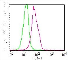 Monoclonal Antibody to DNMT3a (Clone: ABM13G4 ) FITC Conjugated