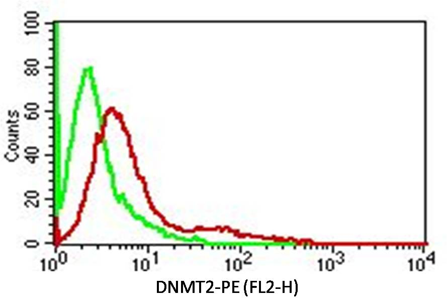 Fig-2: Intracellular Flow analysis  of DNMT2 antibody  in Hela cells using 0.5 µg/ 10^6  cells of anti-DNMT2 antibody (ABM1H70). Green represents isotype control; red represents anti-DNMT 2 antibody. Goat anti-mouse PE conjugate was used as secondary antibody. (Cells were fixed with 4%  paraformaldehyde for 10 min and washed with PBS by centrifuging at 1100 for 5 min followed by permeabilization for 20 min and washed again as mentioned above. Then cell were incubated with primary antibody for 45 min. and after washing the cells twice in PBS, incubated with conjugated secondary antibody for 30 min. Data acquisition was done after washing twice with PBS as mentioned above).