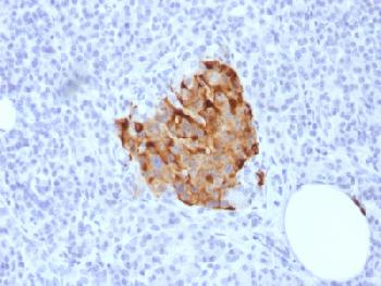 Figure 1: Formalin-fixed, paraffin-embedded human Pancreas stained with Chromogranin A Rabbit Recombinant Monoclonal Antibody (CHGA/1773R).