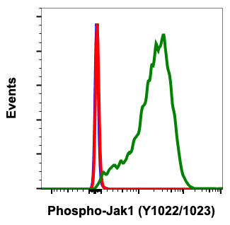 Fig-1: Flow cytometric analysis of Jurkat cells secondary antibody only negative control (blue) or untreated (red) or treated with IFNa + IL-4 + pervanadate (green) using Phospho-Jak1 (Tyr1022/1023) antibody Jak1Y10221023-F11 at 0.01µg/mL.