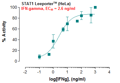 Fig-1: Induction of STAT1 activity by IFN-gamma in STAT1 Leeporter™ – HeLa cells.