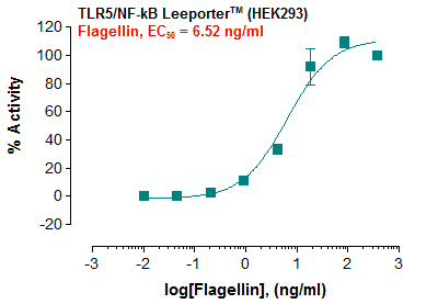 Fig-1: Induction of TLR5 activity by Flagellin in TLR5/NF-kB Leeporter™ – HEK293 cells.