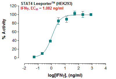 Fig-1: Induction of STAT4 activity by IFN-gamma in STAT4 Leeporter™ – HEK293 cells.