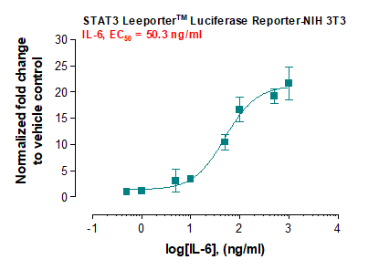 Fig-2: Induction of STAT3 activity by  IL-6  in STAT3 Leeporter™ – NIH 3T3 cells.