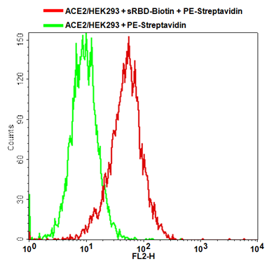 ACE2/HEK293 Stable Cell Line