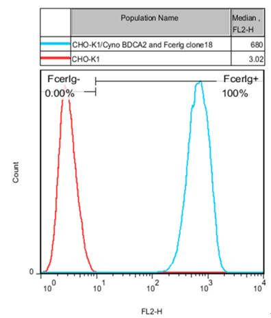 Figure 1: FACS analysis of Cyno BDCA2 and FcER1G expression in CHO-K1 cells.