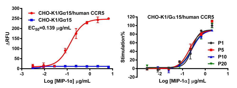 G alpha 15 Stable Cell Line-CCR5-CHO-K1-Human
