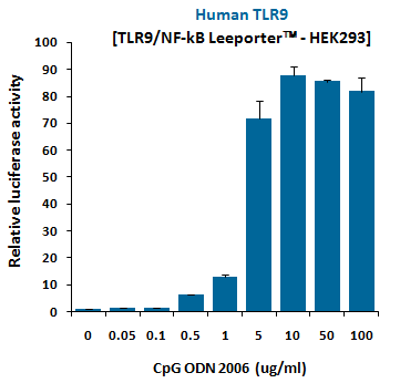 Fig-1: Induction of human TLR9 activity by CpG ODN 2006.