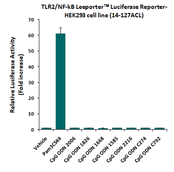 Fig-2: Abeomics' CpG ODNs did not show any TLR2 agonist activity. TLR2/NF-kB Leeporter™ HEK293 cells (14-127ACL) were treated with various CpG ODNs at 100 ug/ml as well as a positive TLR2 agonist, Pam3CSK4, at 10 ng/ml for 16 h, and luciferase activity was then analyzed.