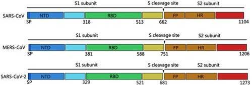 Recombinant 2019-nCoV S Protein RBD-SD1 (C-mFC) (Active)