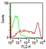 Fig.1: Cell Surface flow analysis of hCD45RO in PBMC (Lymphocytes gated) using 0.5 µg antibody per10^6 cells.  Green represents isotype control (ABEOMICS); red represents anti-hCD45RO antibody (10-7509). Goat anti-mouse PE conjugated  secondary antibody was used (ABEOMICS).