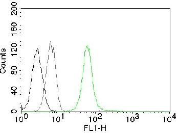 Fig. 1: Flow Cytometry of human Vimentin on Jurkat cells. Black: cells alone; Grey: Isotype Control; Green: CF488-labeled Vimentin Monoclonal Antibody (VM452).