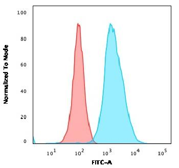 Fig. 5: Flow Cytometric Analysis of U2OS cells using CD40 Mouse Monoclonal Antibody (C40/1605) followed by goat anti-Mouse IgG-CF488 (Blue); Isotype Control (Red).