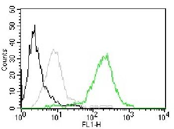 Fig. 1: Flow Cytometry of human CD63 on MCF-7 cells. Black: cells alone; Grey: Isotype Control; Green: CF488-labeled CD63 Monoclonal Antibody (MX-49.129.5).