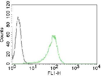 Fig. 1: Flow Cytometry of Human Nuclear Ag (HNA) on 293T cells. Black: cells alone; Grey: Isotype Control; Green: CF488-labeled HNA Monoclonal Antibody (235-1).