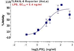 TLR4 Reporter Assay
